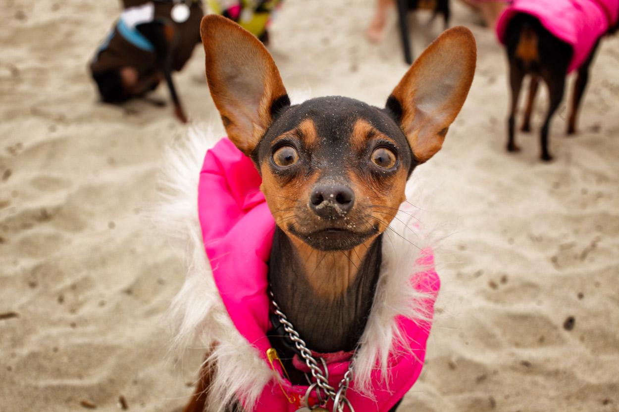 San Diego Beaches – Dog Beach