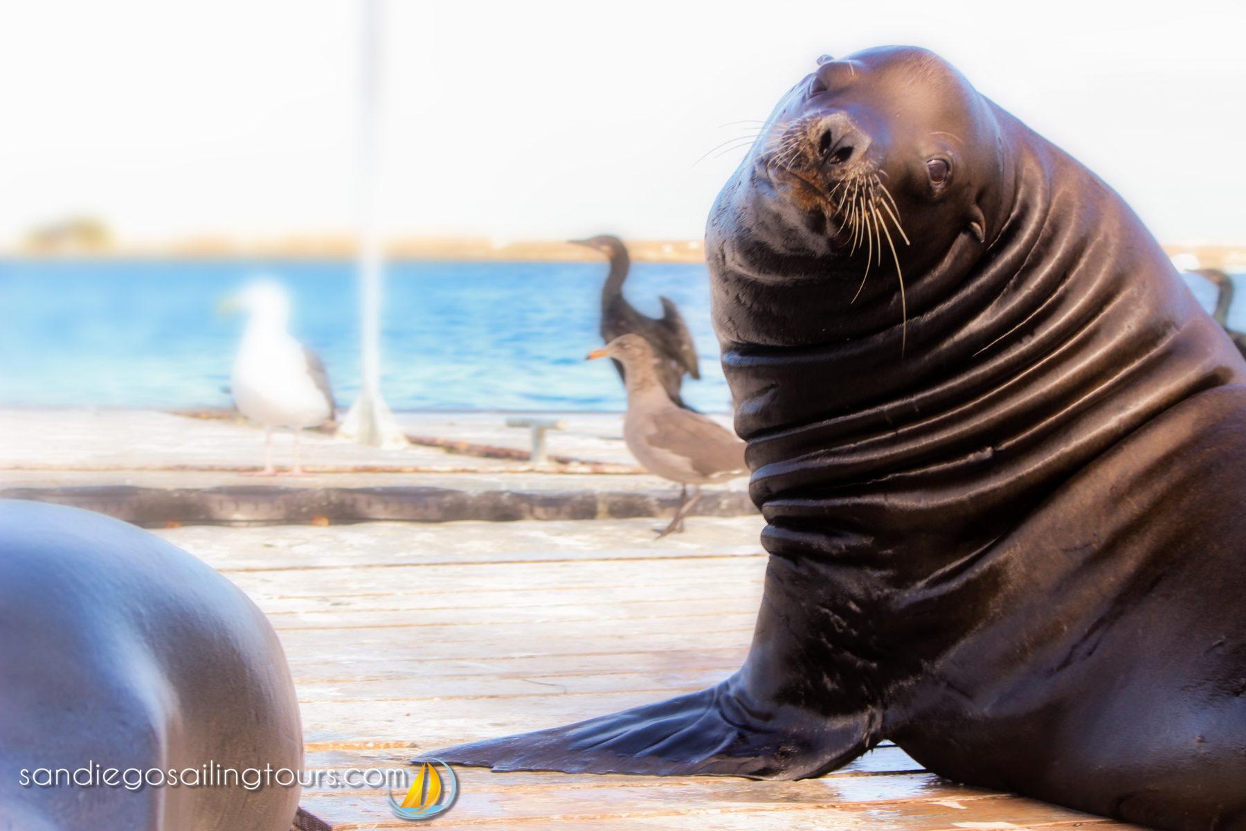 Sea Lion Neighbors