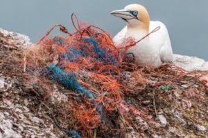 sad bird among beach trash. The bird is judging you.