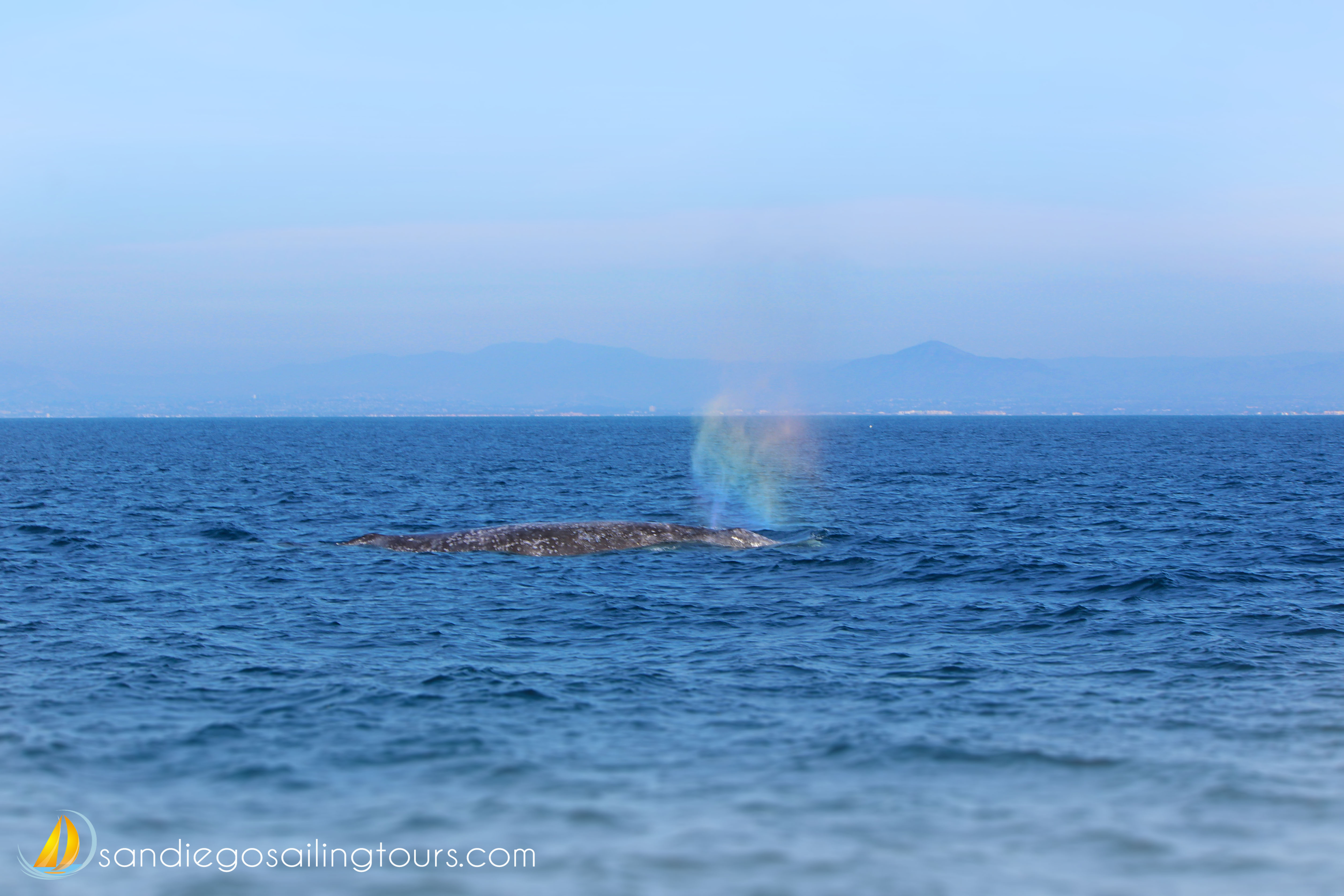 Featured Image: Rainbow Whale