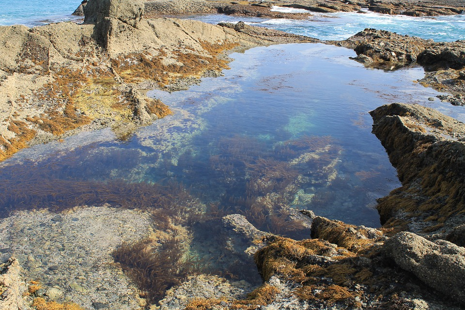 VIEW LOOKING DOWN INTO TIDE POOLS WITH SEA LIFE