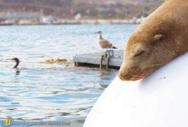 Whale Watching Seafari
