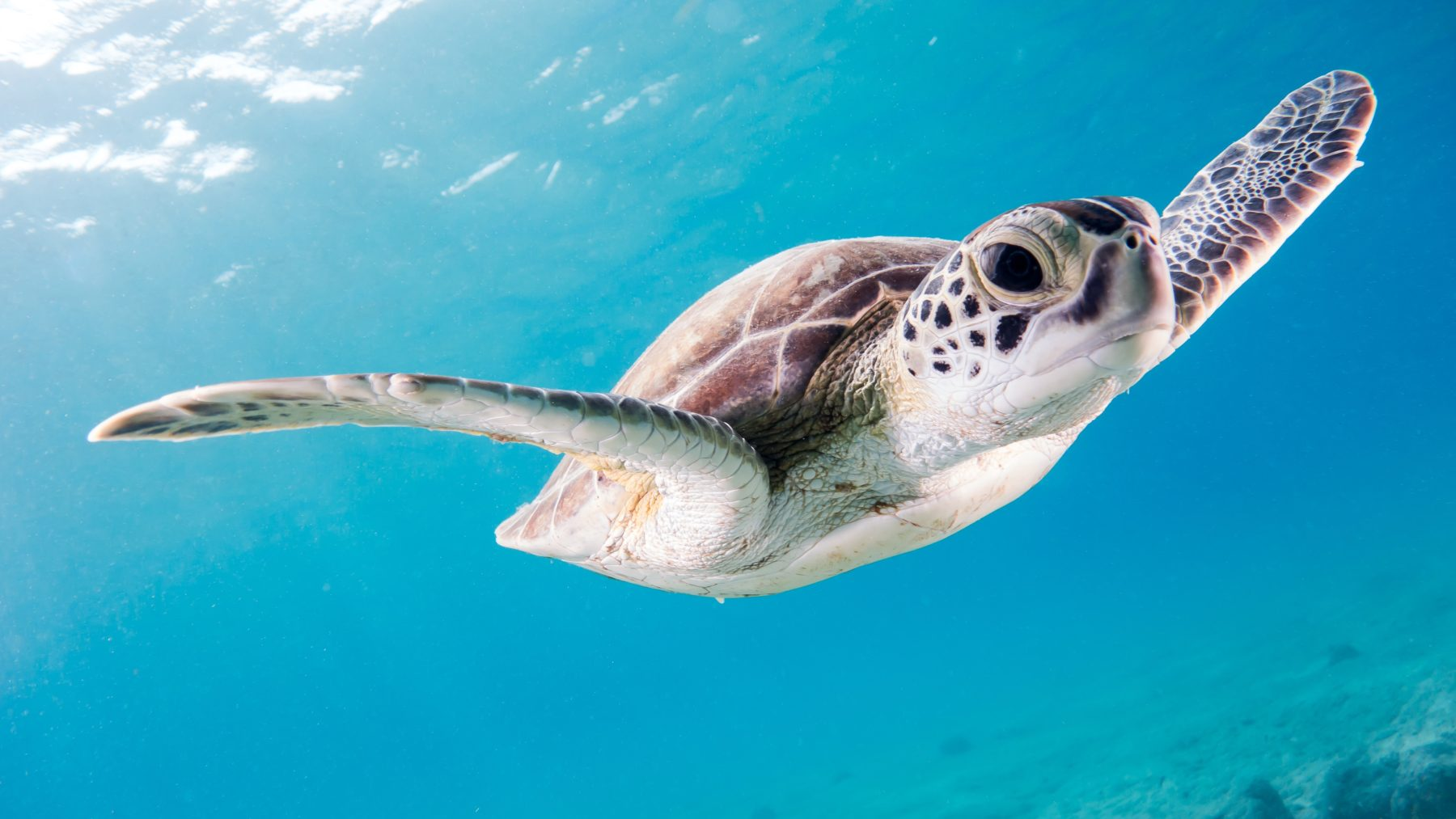 The Effects that Climate Change has on Sea Turtles