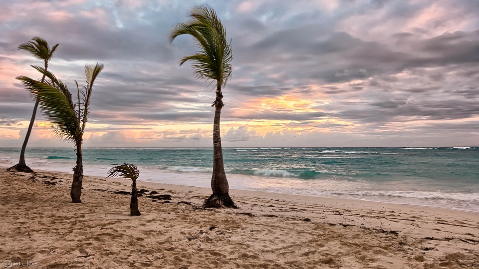 overcast sky on ocean during sunset. sandy beach with 4 palm trees to the left of frame